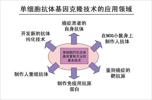 单细胞抗体基因克隆技术的应用领域